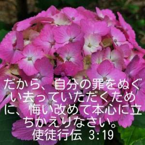使徒行伝3章19節(紫陽花)