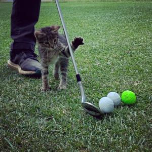 猫とゴルフ
