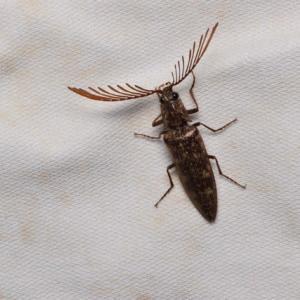 夜の昆虫たち