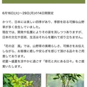 丸井錦糸町店イベント「花の店ふわり」終了いたしましました。