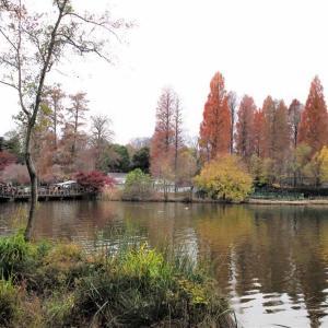 武蔵野水景Ⅱ