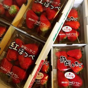静岡県藤枝市のイチゴ@ふるさと納税返礼品
