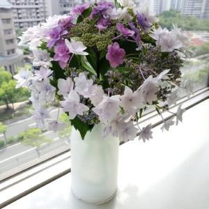 【スタッフの部屋】今週のお花(紫陽花)