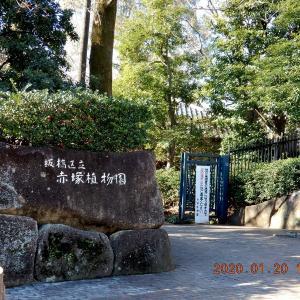 No.1991 リハビリも兼ねて、春を感じに赤塚植物園へ