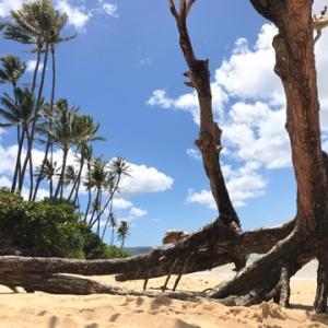 夏休み ハワイ