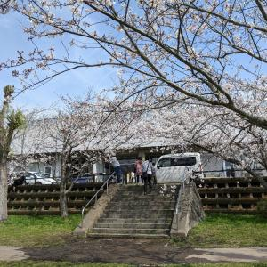 Googleマップを見ながら散策(八千代市新川の千本桜)