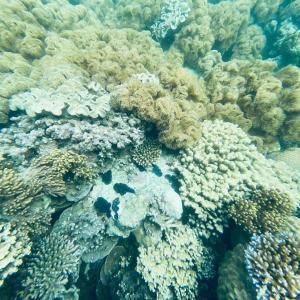 珊瑚礁に潜む毒
