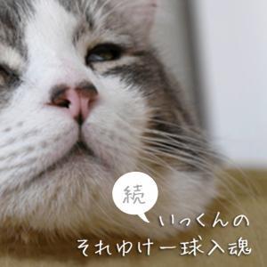千葉県【ペット同行可能な避難所】