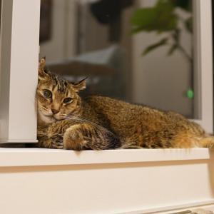窓辺でたたずむ猫の、最終形態。