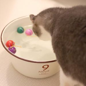 (多分)世界初!○○をする猫。