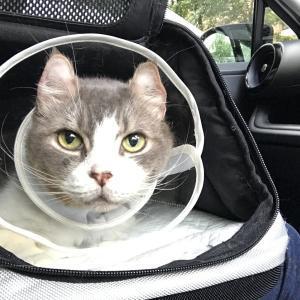耳垢線がん手術前夜から1ヶ月間のいっくんの様子【前編】