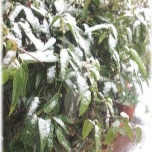 ☆雪だにゃ~ん。
