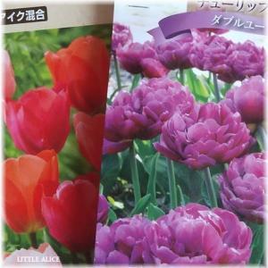 ☆春のお楽しみとか収穫の楽しみとか。
