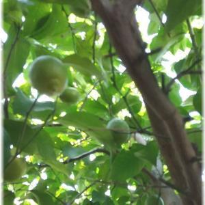 ☆青いレモン。