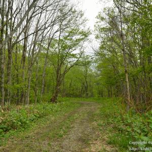 林道と化した未成線を歩く