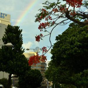 旅先で虹を見た!