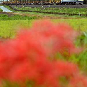 赤い花と工臨返空