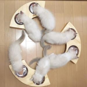 便利な食卓で子猫の食事☆彡