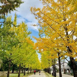 各務原市「冬ソナストリート」の黄葉