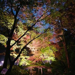 東京ぶらり①「六義園」の紅葉ライトアップ