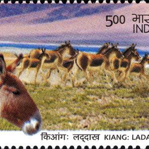 ラダックで中印両軍衝突