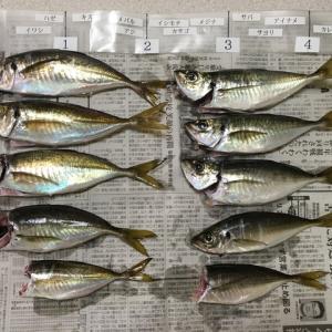 サバ、太刀魚 調査