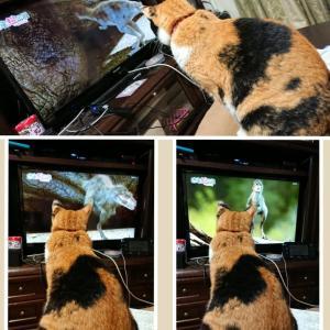 テレビ大好き
