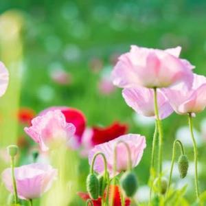 5人の花咲く 皐月の夜