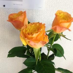 オレンジ色の薔薇、  朗読公演