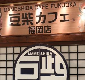 【閉店予定】豆柴カフェ福岡店が閉店予定だそうです(詳細は 「福岡アンテナ」 で検索)