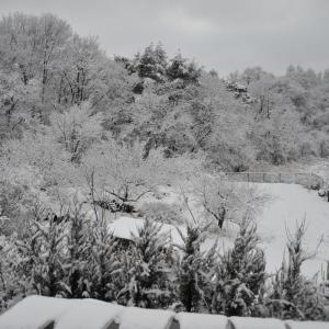 3月まさかの積雪