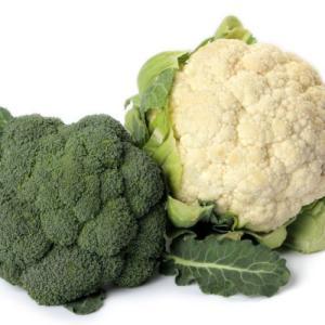 白い野菜と緑の野菜の対決は・・・