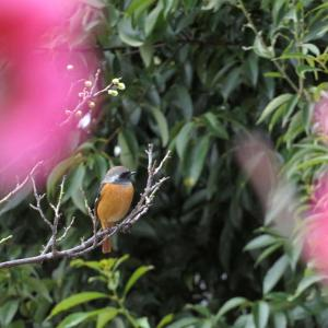 久しぶりに、キレイな鳥さんに逢った!。