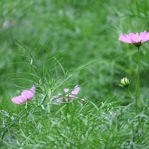 植物園に写ん歩。