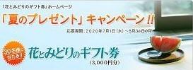 花とみどりのギフト券 「夏のプレゼント」キャンペーン!!