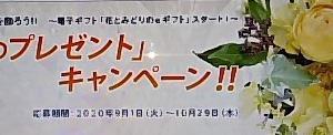 花とみどりのギフト券 「秋のプレゼント」キャンペーン