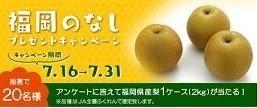 JA全農ふくれん 「福岡のなし」プレゼント