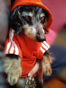 赤い服〜♪