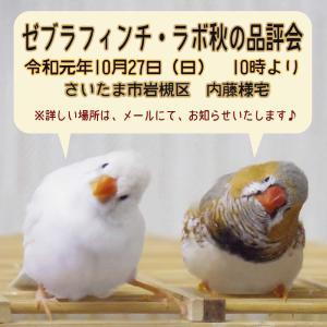 ゼブラフィンチラボ秋季品評会!