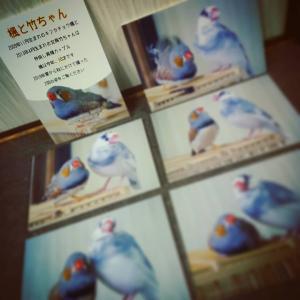 ことりカフェ巣鴨 3周年イベントに参加します!
