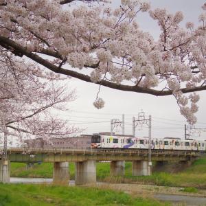 桜(と電車)攻め。2020