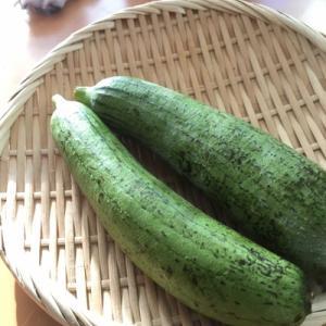 NHK沖縄ちゅらTV グルメコーナーにてヘチマ料理紹介します。