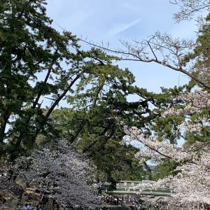 2021年 昨日、夙川にお花見行ってきました~