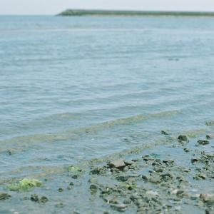 海辺と珈琲