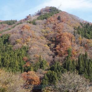 11月19日の山