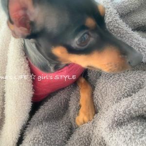 贅沢犬。。。