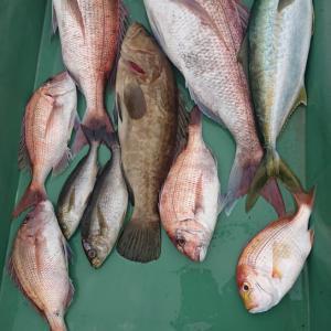 2020/06/06 近海タイラバ&根魚&ライトジギングの釣果