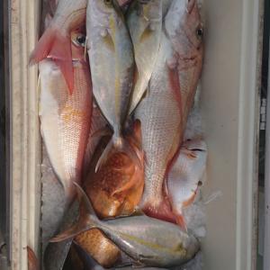 2020/10/03 近海タイラバ&根魚&ライトジギングの釣果