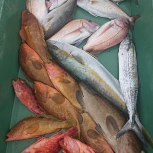 2020/11/07 近海鯛ラバ&根魚&ライトジギングの釣果