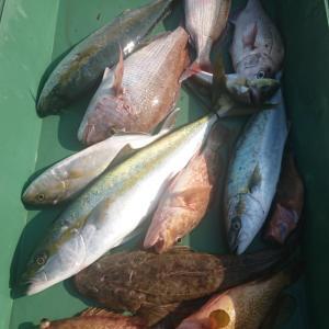 2020/11/15 近海タイラバ&根魚&ライトジギングの釣果